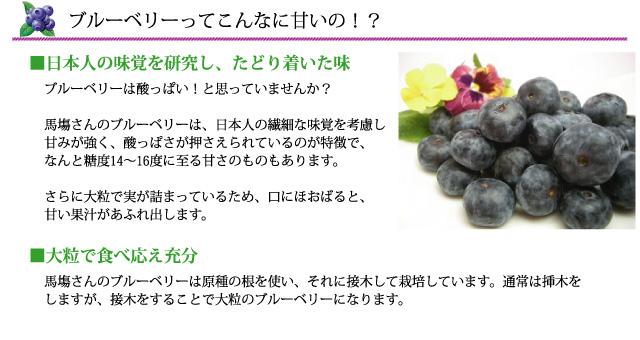 馬塲さんのブルーベリーは、日本人の繊細な味覚を考慮し<br /> 甘みが強く、酸っぱさが押さえられているのが特徴で、なんと糖度14~16度に至る甘さのものもあります。