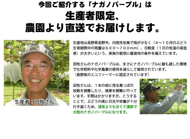 田牧さんのナガノパープルは、通常よりも甘くて濃厚で大粒です。