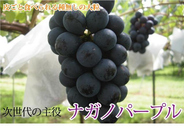 長野県産 田牧さんのナガノパープル