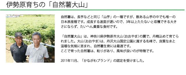 「自然薯大山」は、神奈川県伊勢原市大山(おおやま)の麓で、丹精込めて育てられました。2011年11月、「かながわブランド」の認定を受けました。